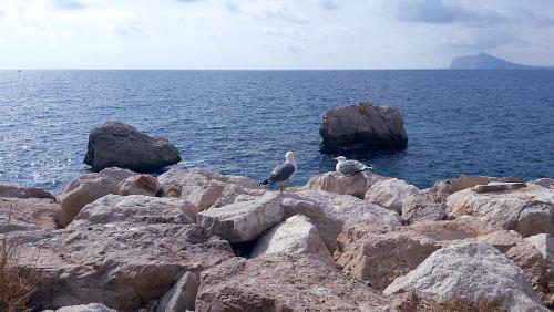 Zeemeeuw, vogel, op de rotsen met blauwe zee en blauw lucht, Calpe