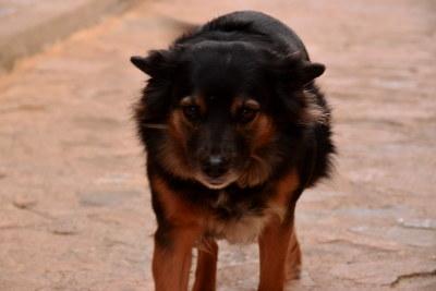 Finestrat, bruin, zwarte hond, loslopend op straat