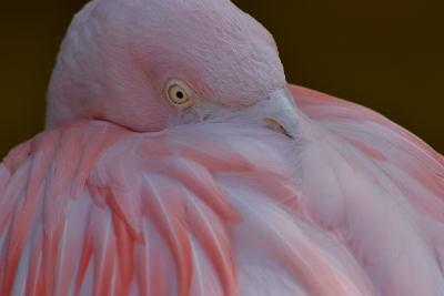 Roze vogel in Terra Natura, Benidorm
