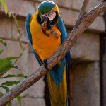 Ara, blauw, gele papegaai in Terra Natura, Benidorm
