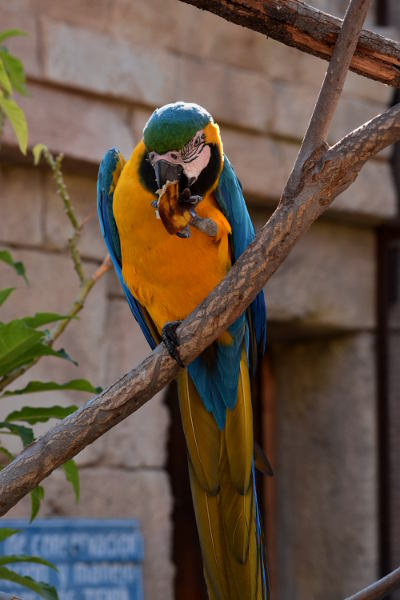 Parrot, blue and yellow, Benidorm, Zoo