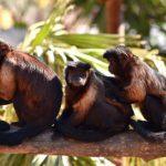 drie aapjes in dierentuin in Benidorm
