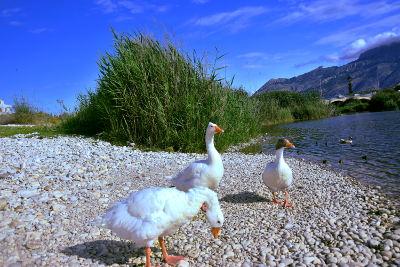De vogels van Altea, monding rivier Algar