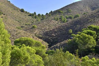 heuvels, bomen, natuurpark