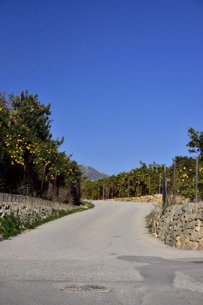 Sinaasappelbomen, blauwe lucht, landbouw